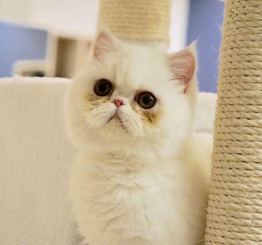 猫の屋おでん「たまご」